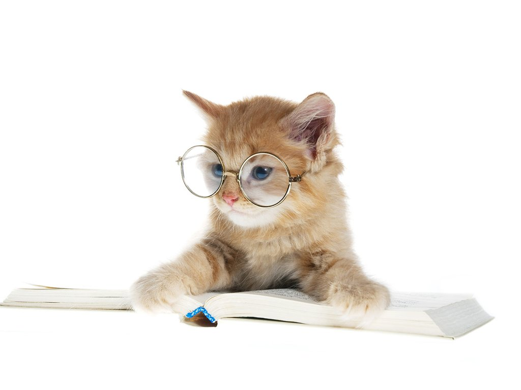 Cute-Cat-Reading-Book-images-background