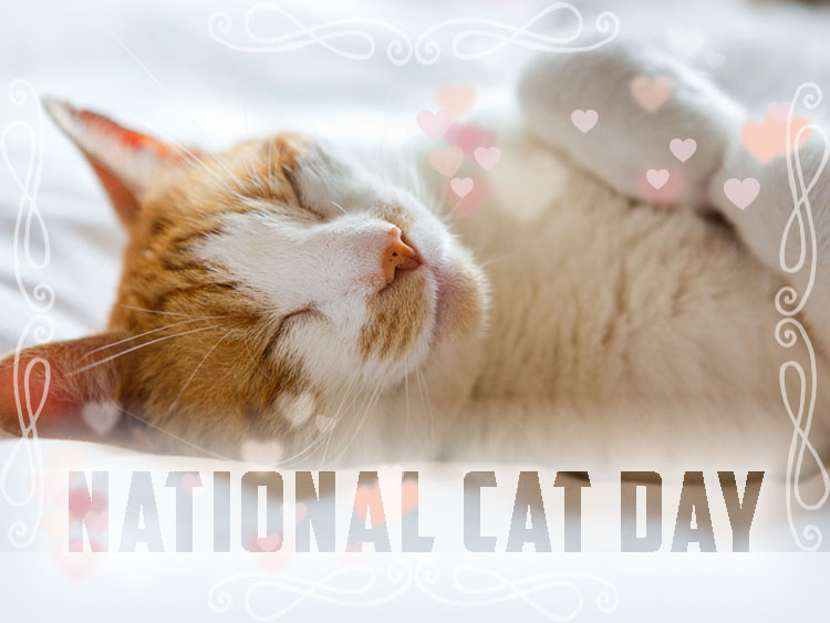 NationalCatDay1
